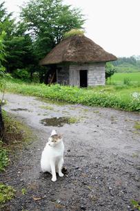 水車小屋と野良猫の素材 [FYI00497689]