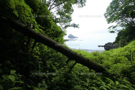 緑に覆われた海岸の素材 [FYI00497798]