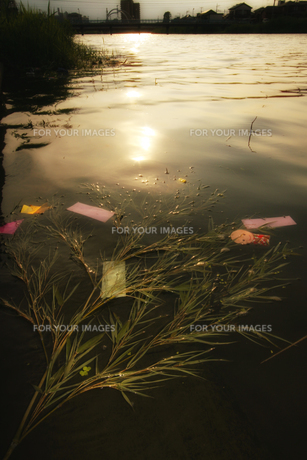 川に流された七夕の飾りの写真素材 [FYI00497808]