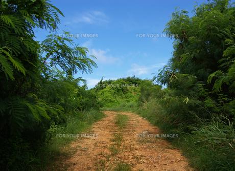 グアム島の赤土の道の素材 [FYI00497822]