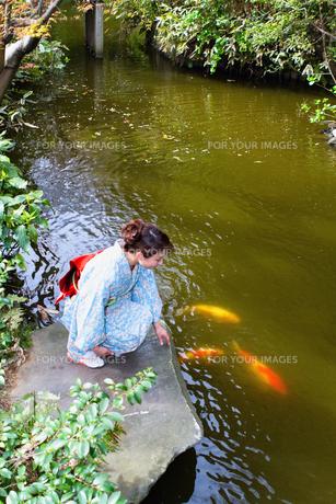 池の鯉と着物の日本人女性の素材 [FYI00497832]