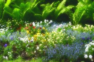 ヨーロッパ オーストリアの花壇の写真素材 [FYI00497902]