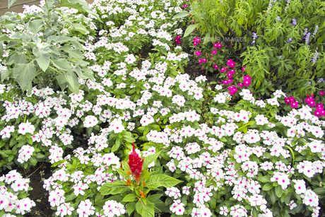 多種多様な花畑の写真素材 [FYI00497974]
