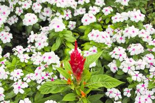 白い花の集まりの写真素材 [FYI00497978]
