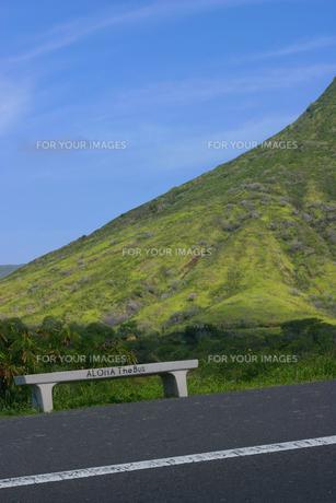 ハワイ、オアフ島のバス停の写真素材 [FYI00498041]