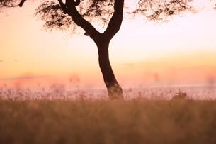 ハワイオアフ島、マカハ地区の夕焼けの様子の写真素材 [FYI00498093]