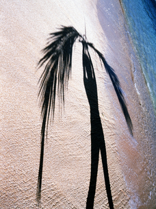 トロピカルなビーチで、椰子の木の葉をもつ人の影の写真素材 [FYI00498163]