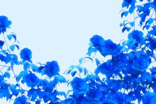 青いバラの写真素材 [FYI00498377]