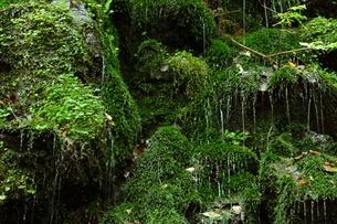 森の岩清水の写真素材 [FYI00498458]