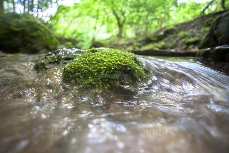 冷たい水の小川の写真素材 [FYI00498670]