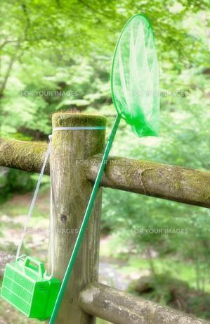虫取り網とかごの写真素材 [FYI00498678]