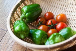 家庭菜園の収穫の写真素材 [FYI00498831]