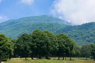 笹ヶ峰高原の写真素材 [FYI00498892]