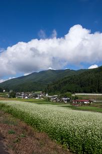 青空と雲とソバ畑の写真素材 [FYI00498910]