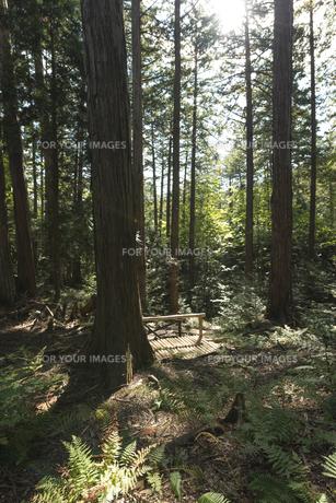 ヒノキの森の素材 [FYI00498943]