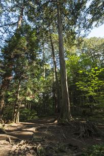 ヒノキの森の素材 [FYI00498944]