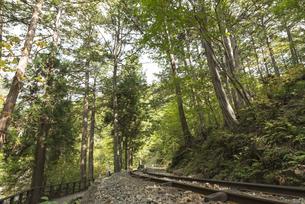 ヒノキの森と森林鉄道の素材 [FYI00498954]