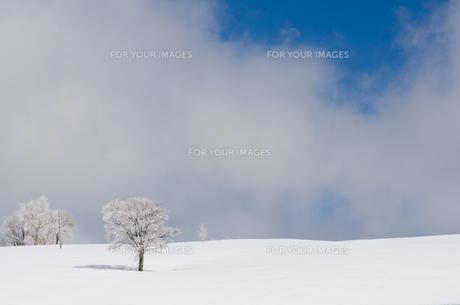 雪山と樹氷の素材 [FYI00499018]