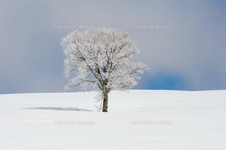 雪山と樹氷の素材 [FYI00499022]