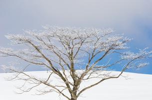 雪山と樹氷の素材 [FYI00499023]