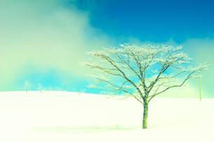雪山と樹氷の素材 [FYI00499024]