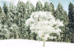 雪山と樹氷の素材 [FYI00499025]