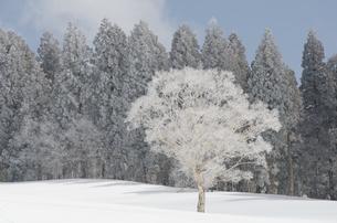 雪山と樹氷の素材 [FYI00499026]