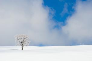 雪山と樹氷の素材 [FYI00499027]