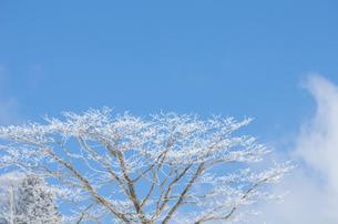 雪山と樹氷の素材 [FYI00499028]