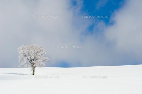 雪山と樹氷の素材 [FYI00499030]