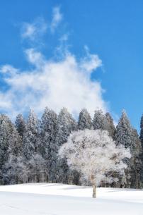 雪山と樹氷の素材 [FYI00499031]