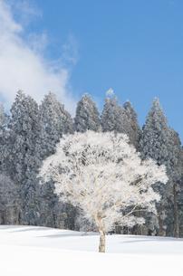 雪山と樹氷の素材 [FYI00499032]