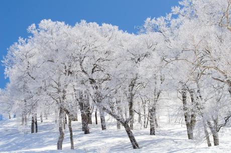 雪山と樹氷の素材 [FYI00499033]