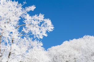 雪山と樹氷の素材 [FYI00499034]