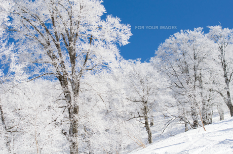 雪山と樹氷の素材 [FYI00499036]