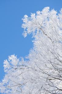 雪山と樹氷の素材 [FYI00499038]