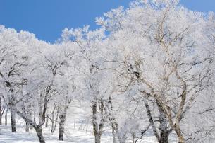 雪山と樹氷の素材 [FYI00499040]