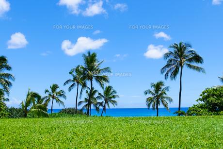 椰子の木と青空と青い海の素材 [FYI00499049]