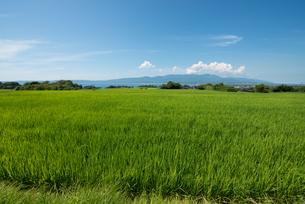 佐渡島の田園風景の素材 [FYI00499056]