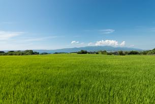 佐渡島の田園風景の素材 [FYI00499059]