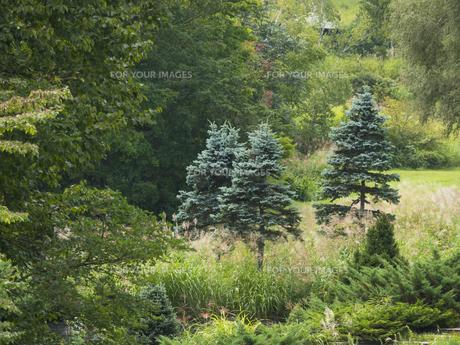 森の木の素材 [FYI00499065]
