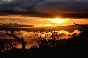 ハワイ島 マウアロナ山から見る夕日の素材 [FYI00499071]