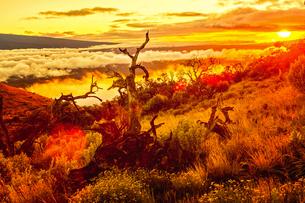 ハワイ島 マウアロナ山から見る夕日の素材 [FYI00499072]
