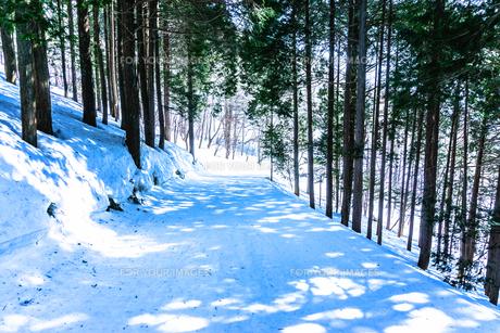 スキー場の林間コースの素材 [FYI00499074]