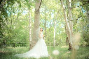 結婚式 新婦 日本人の素材 [FYI00499093]