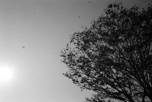 木と風の写真素材 [FYI00499107]