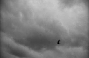 鳥飛ぶの写真素材 [FYI00499111]