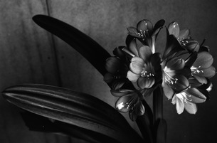 花の写真素材 [FYI00499124]