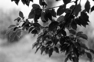 雨、木の下での写真素材 [FYI00499135]