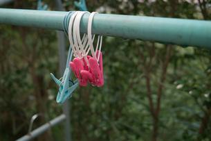洗濯バサミの写真素材 [FYI00499167]